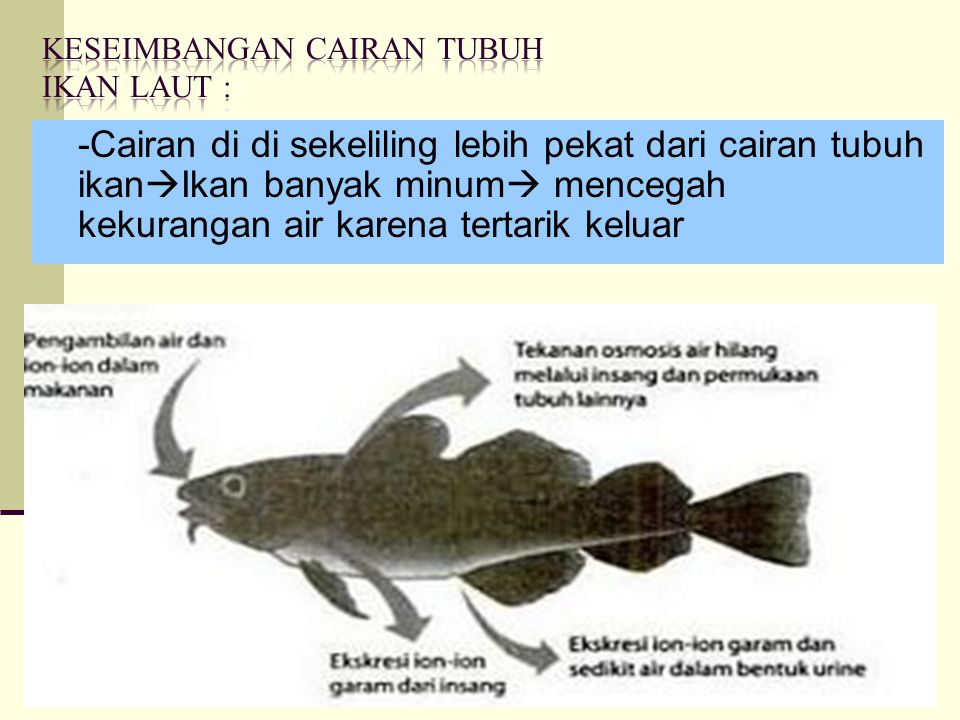Keseimbangan Cairan tubuh Ikan laut :
