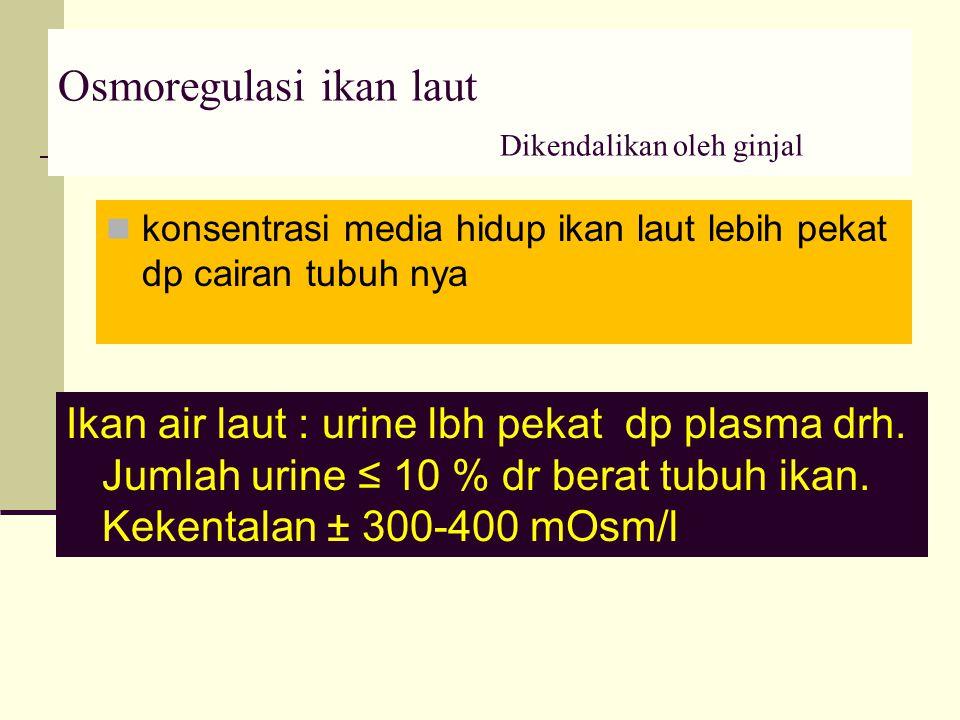 Osmoregulasi ikan laut Dikendalikan oleh ginjal