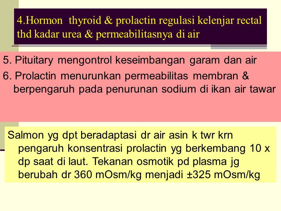 4.Hormon thyroid & prolactin regulasi kelenjar rectal thd kadar urea & permeabilitasnya di air