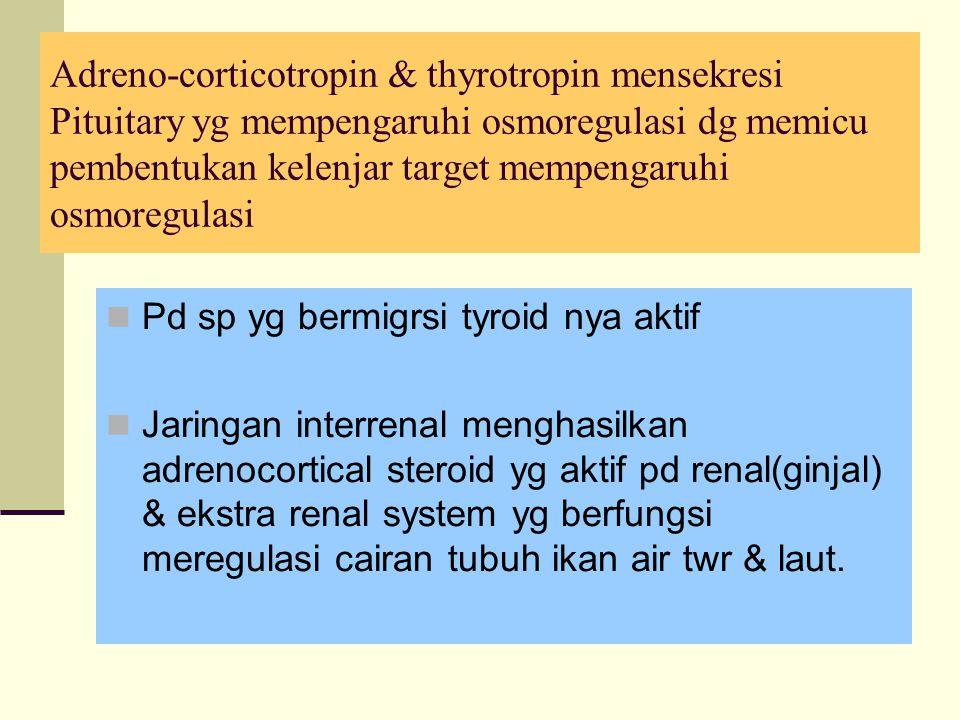Adreno-corticotropin & thyrotropin mensekresi Pituitary yg mempengaruhi osmoregulasi dg memicu pembentukan kelenjar target mempengaruhi osmoregulasi