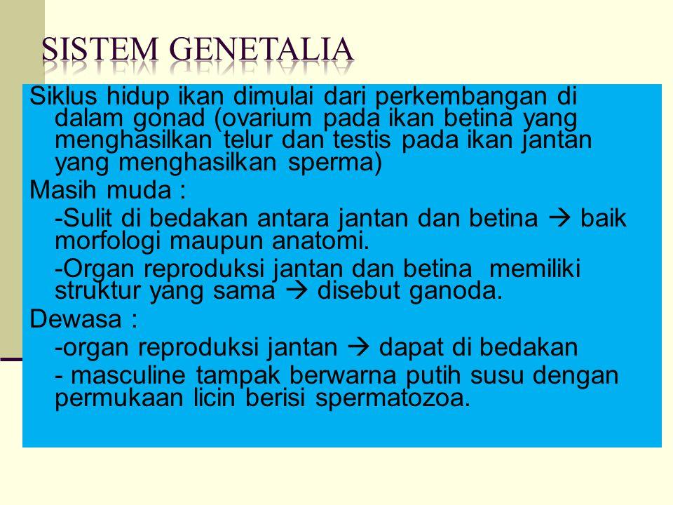 Sistem Genetalia