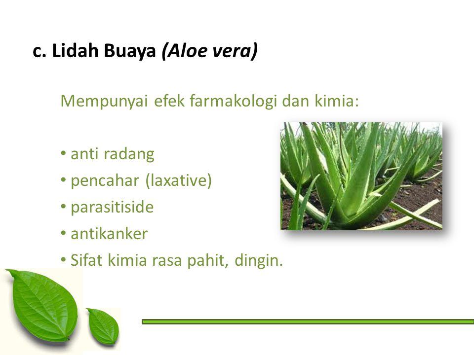 c. Lidah Buaya (Aloe vera)