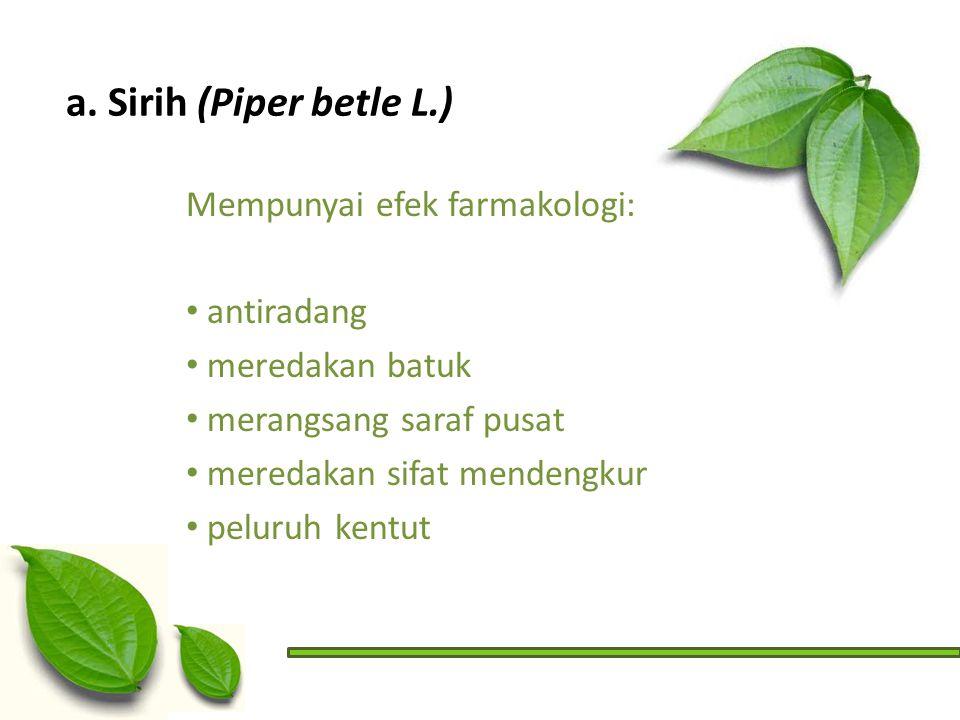 a. Sirih (Piper betle L.) Mempunyai efek farmakologi: antiradang