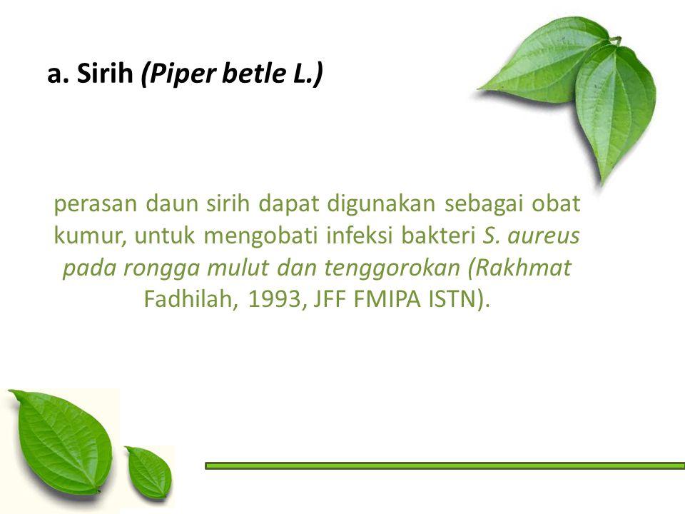 a. Sirih (Piper betle L.)