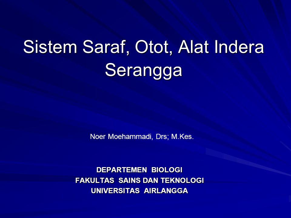 Sistem Saraf, Otot, Alat Indera Serangga