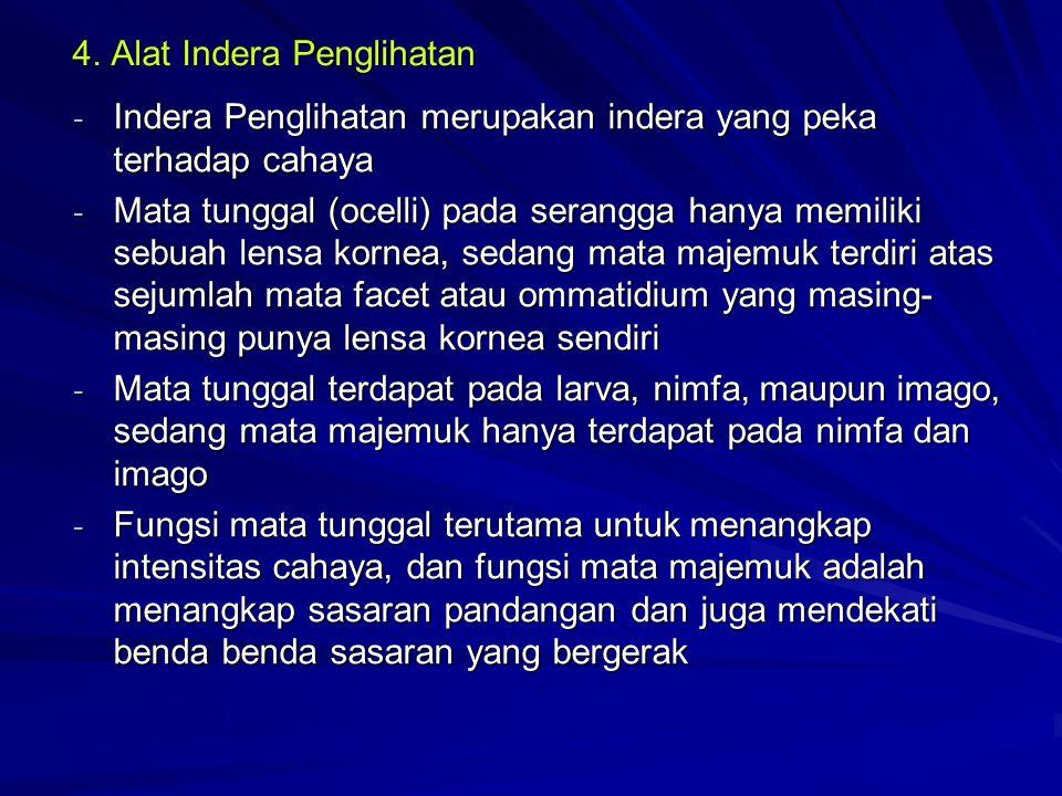 4. Alat Indera Penglihatan