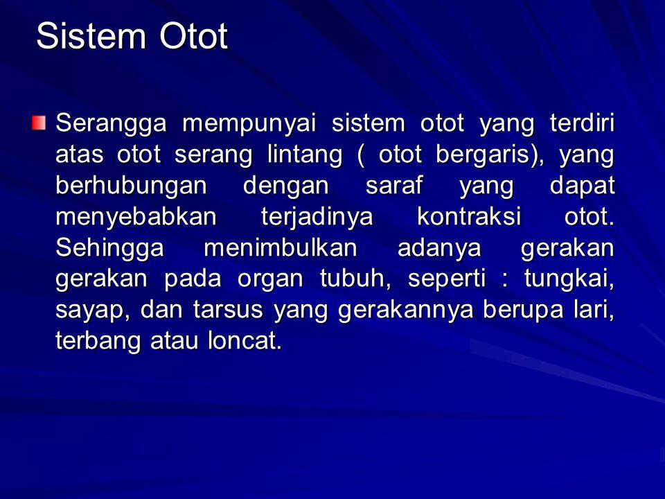 Sistem Otot