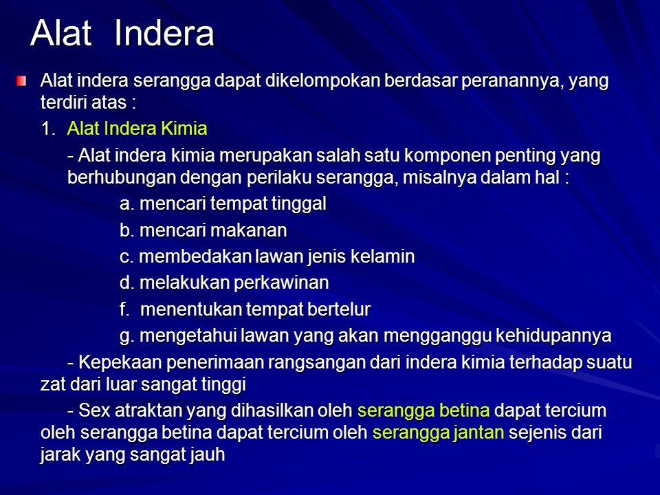 Alat Indera Alat indera serangga dapat dikelompokan berdasar peranannya, yang terdiri atas : 1. Alat Indera Kimia.