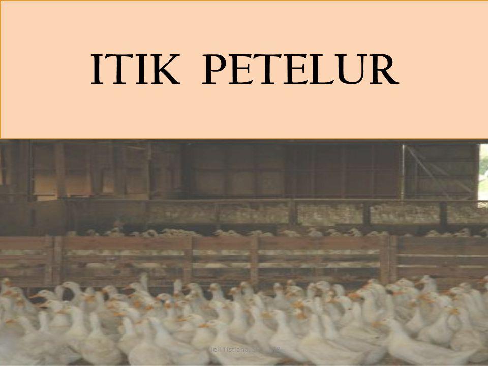 ITIK PETELUR Heli Tistiana, SPt., MP