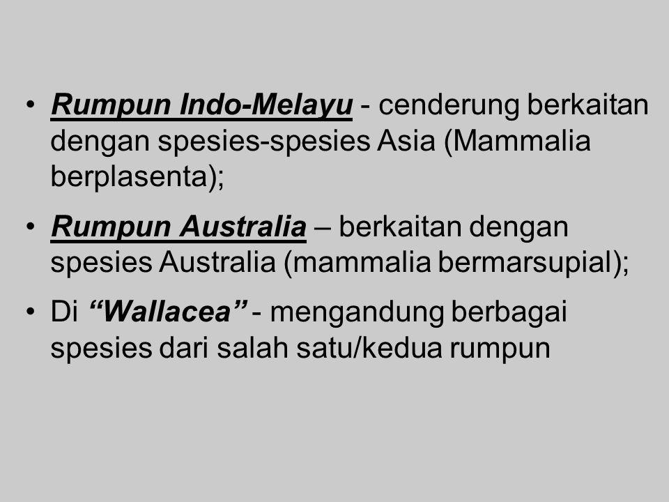 Rumpun Indo-Melayu - cenderung berkaitan dengan spesies-spesies Asia (Mammalia berplasenta);