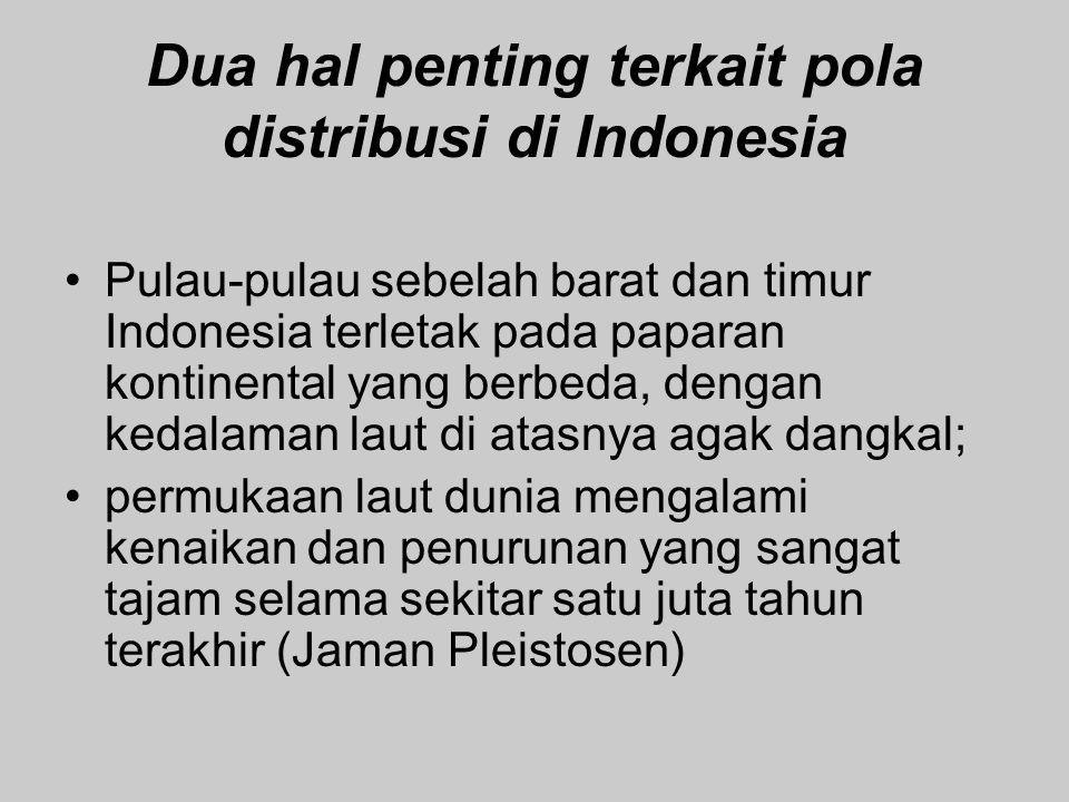 Dua hal penting terkait pola distribusi di Indonesia