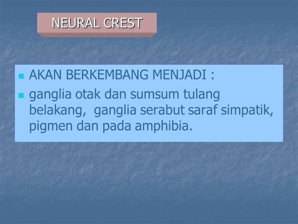 NEURAL CREST AKAN BERKEMBANG MENJADI : ganglia otak dan sumsum tulang belakang, ganglia serabut saraf simpatik, pigmen dan pada amphibia.
