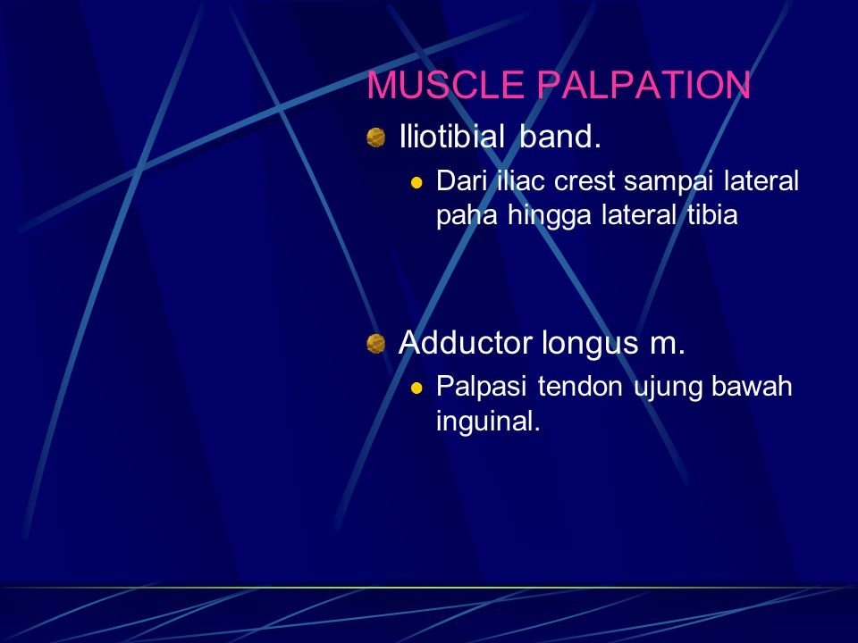 MUSCLE PALPATION Iliotibial band. Adductor longus m.