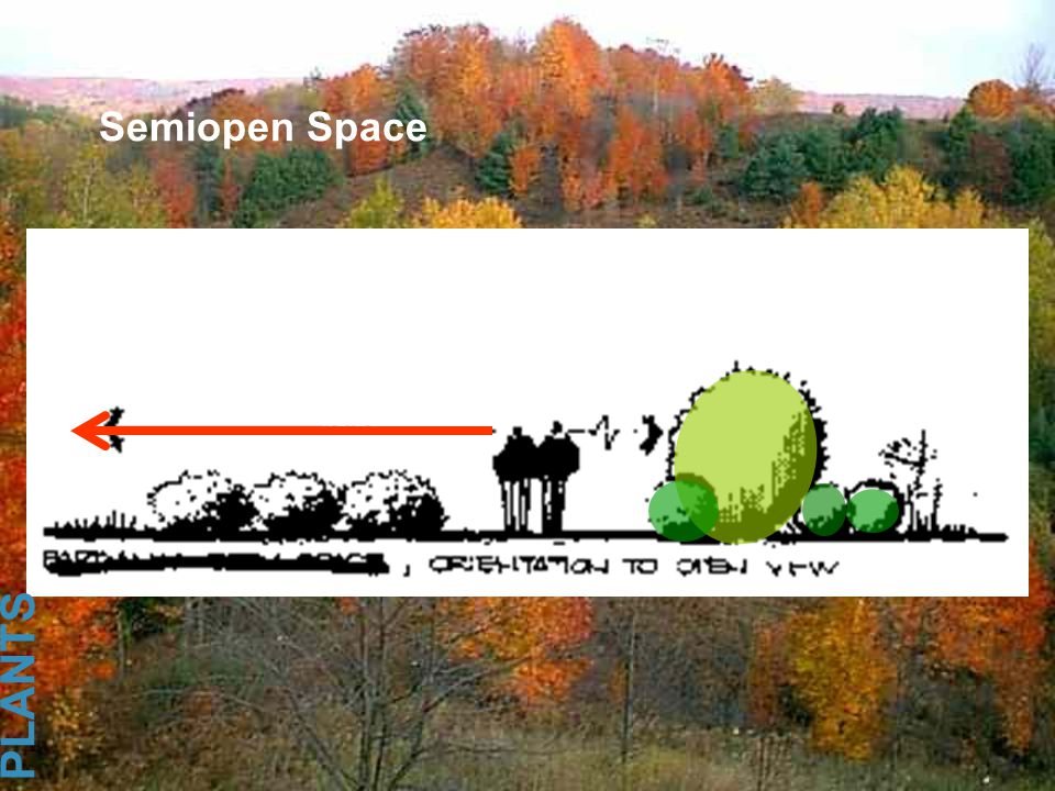 Semiopen Space PLANTS