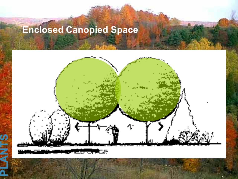 Enclosed Canopied Space