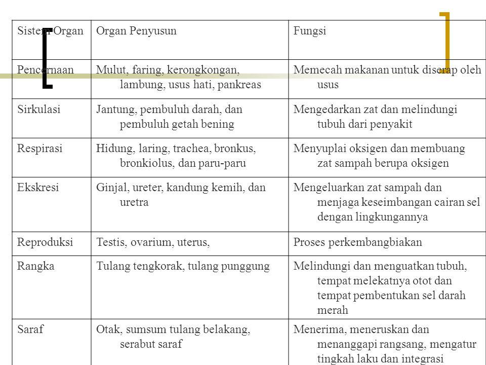 Sistem Organ Organ Penyusun. Fungsi. Pencernaan. Mulut, faring, kerongkongan, lambung, usus hati, pankreas.