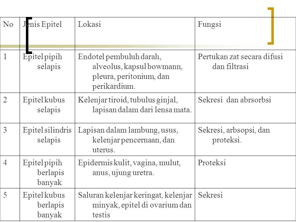 No Jenis Epitel. Lokasi. Fungsi. 1. Epitel pipih selapis. Endotel pembuluh darah, alveolus, kapsul bowmann, pleura, peritonium, dan perikardium.