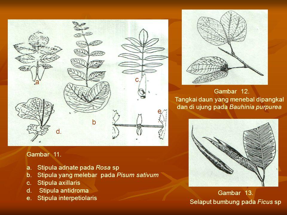 c. a e . b d. Gambar 12. Tangkai daun yang menebal dipangkal