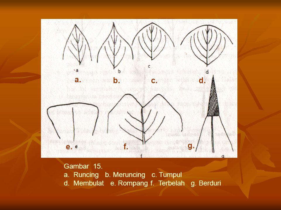 a. b. c. d. e. f. g. Gambar 15. a. Runcing b. Meruncing c. Tumpul