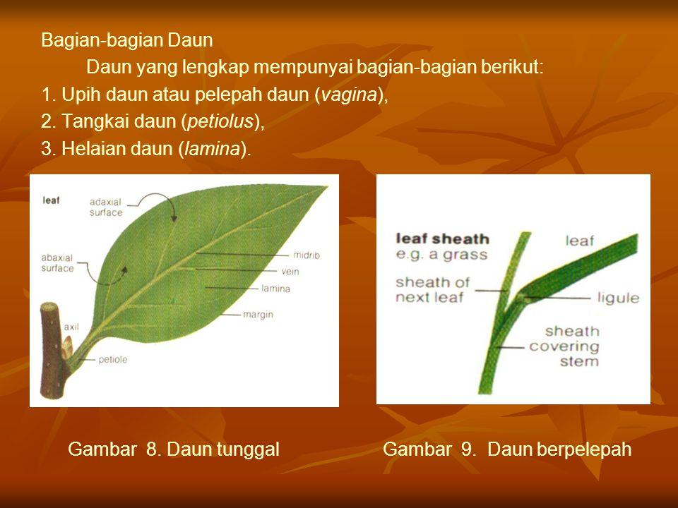 Bagian-bagian Daun Daun yang lengkap mempunyai bagian-bagian berikut: 1. Upih daun atau pelepah daun (vagina),