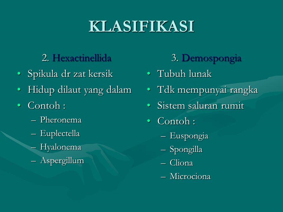 KLASIFIKASI 2. Hexactinellida Spikula dr zat kersik
