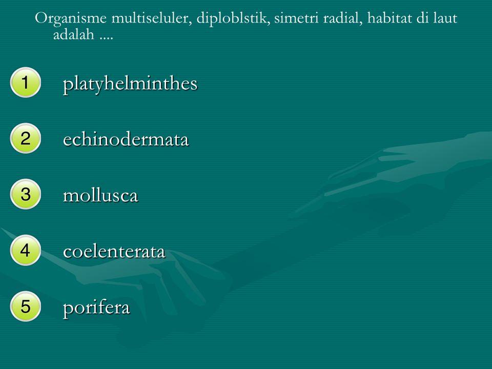 platyhelminthes echinodermata mollusca coelenterata porifera