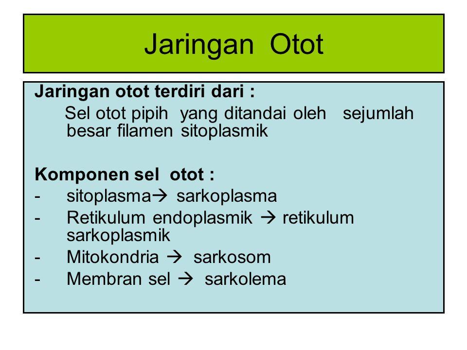 Jaringan Otot Jaringan otot terdiri dari :