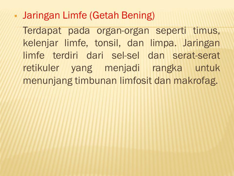 Jaringan Limfe (Getah Bening)