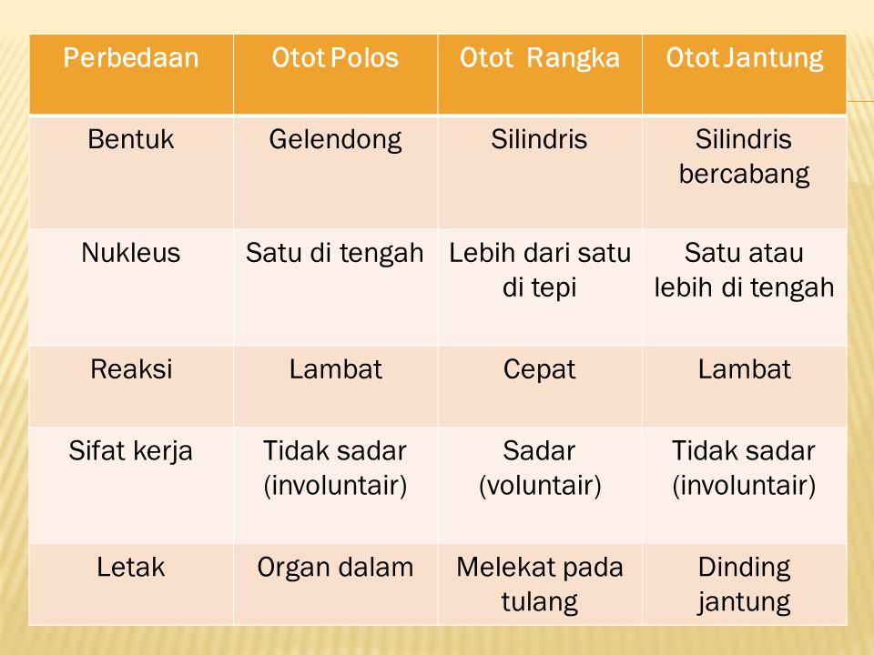 Perbedaan Otot Polos Otot Rangka Otot Jantung