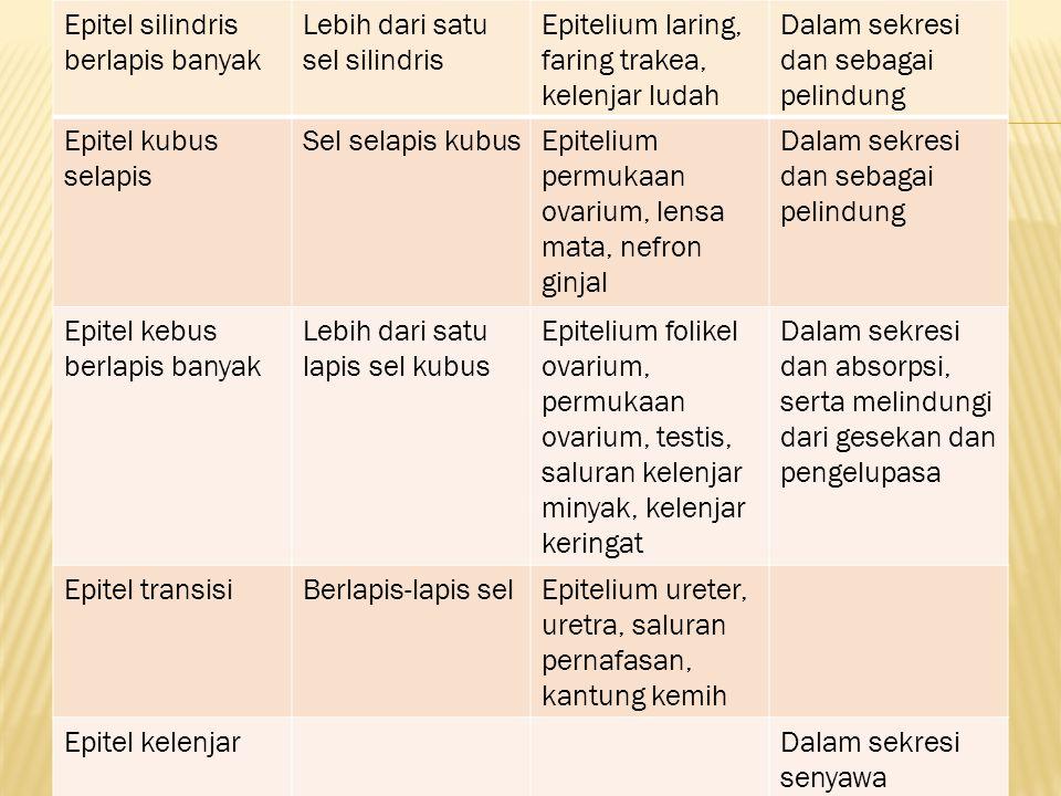 Epitel silindris berlapis banyak