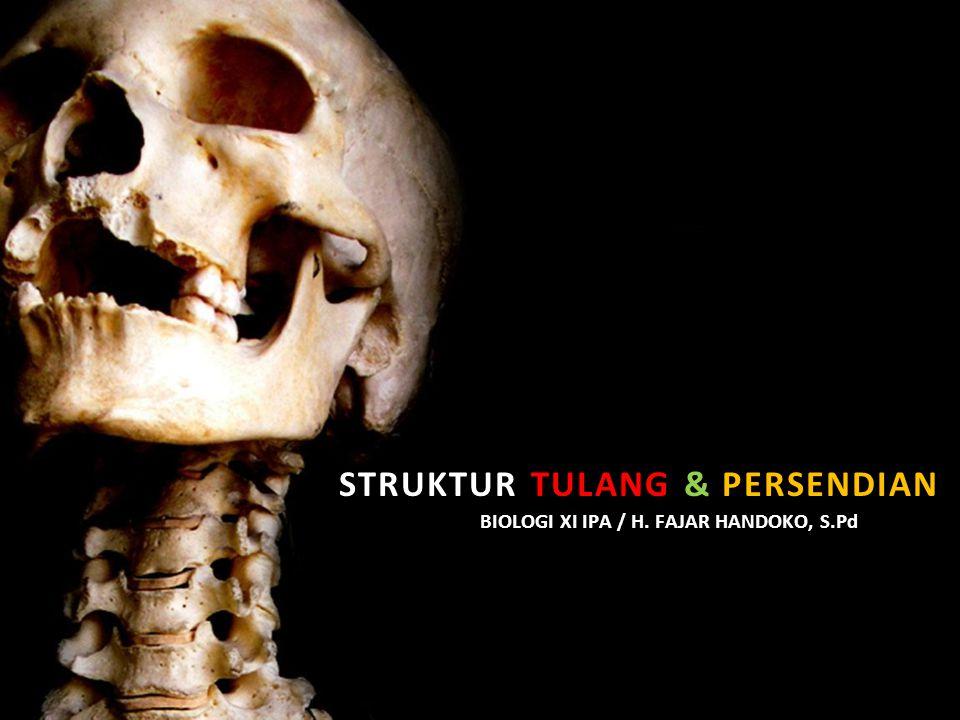 Struktur tulang & persendian