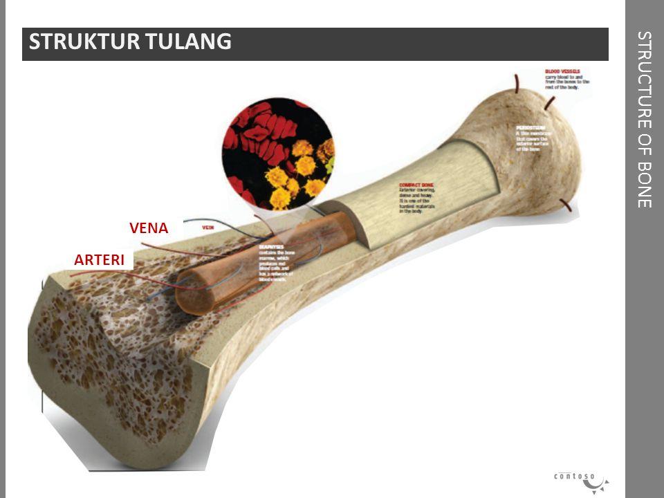 STRUKTUR TULANG STRUCTURE OF BONE VENA ARTERI