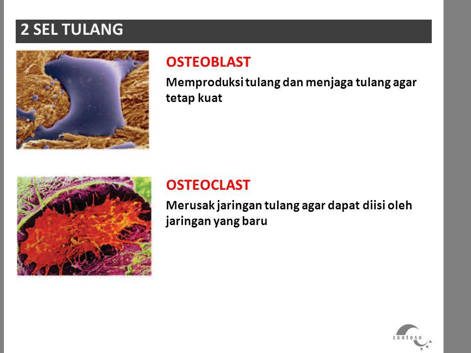 2 SEL TULANG OSTEOBLAST OSTEOCLAST