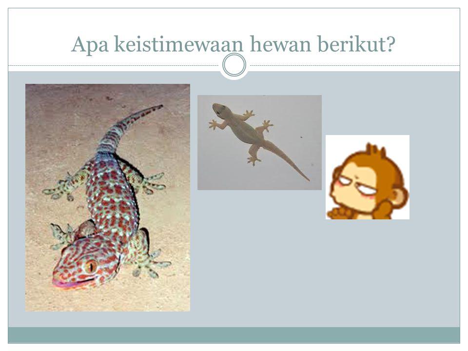 Apa keistimewaan hewan berikut