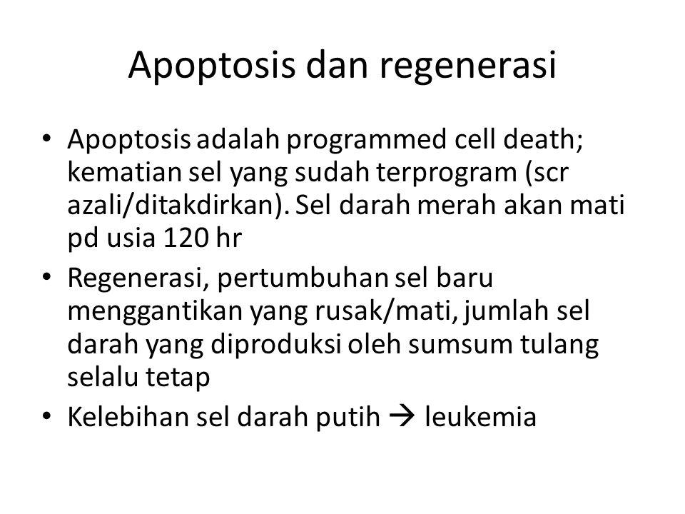 Apoptosis dan regenerasi