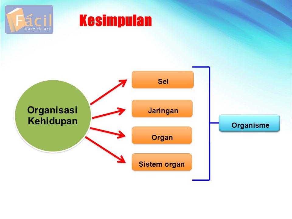 Kesimpulan Organisasi Kehidupan Sel Jaringan Organisme Organ