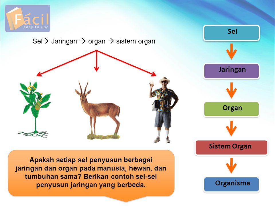 Sel Jaringan  organ  sistem organ