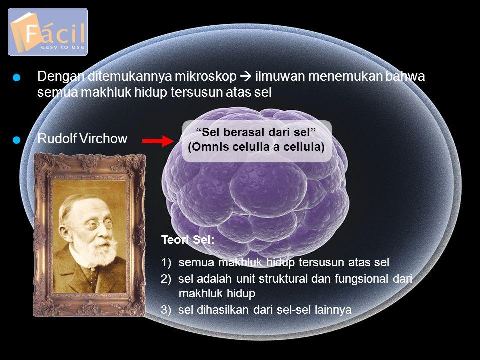 (Omnis celulla a cellula)