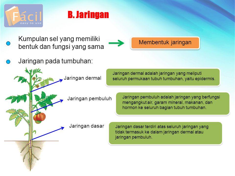B. Jaringan Kumpulan sel yang memiliki bentuk dan fungsi yang sama
