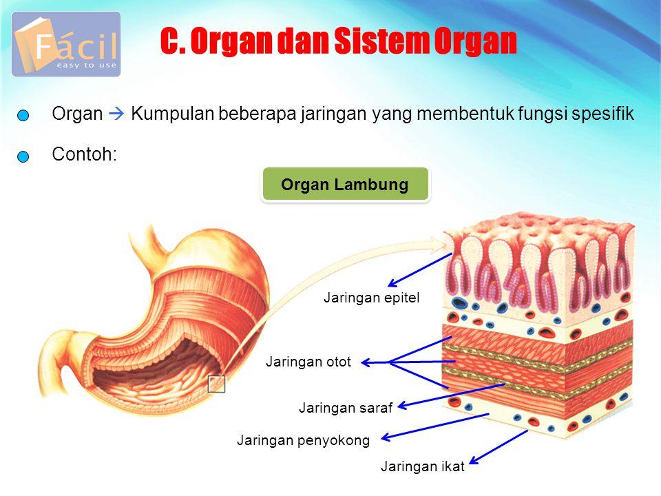 C. Organ dan Sistem Organ