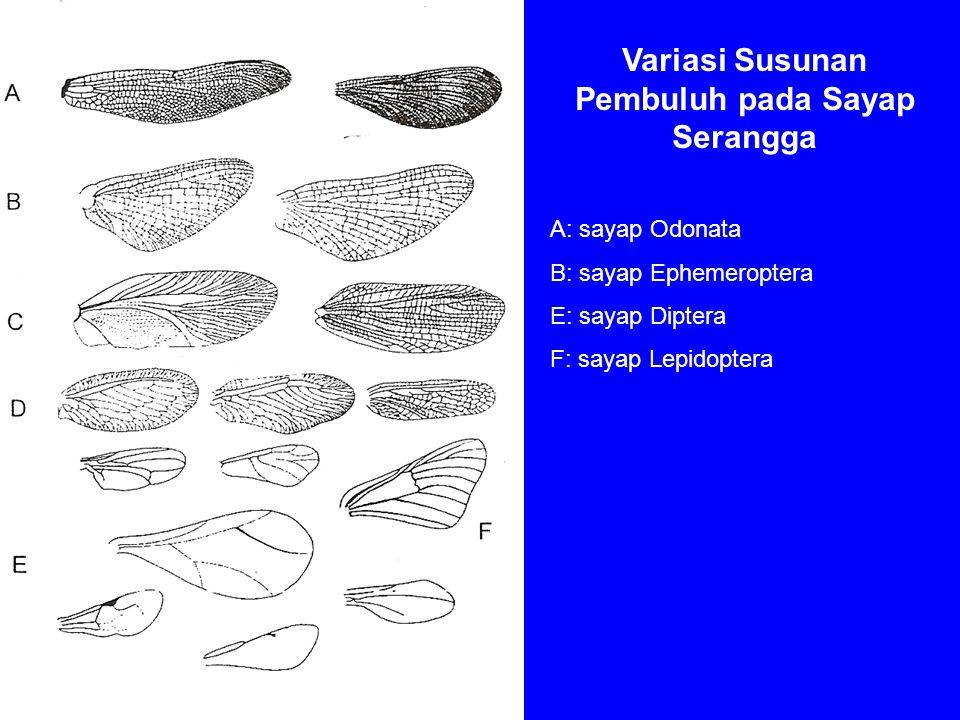 Variasi Susunan Pembuluh pada Sayap Serangga