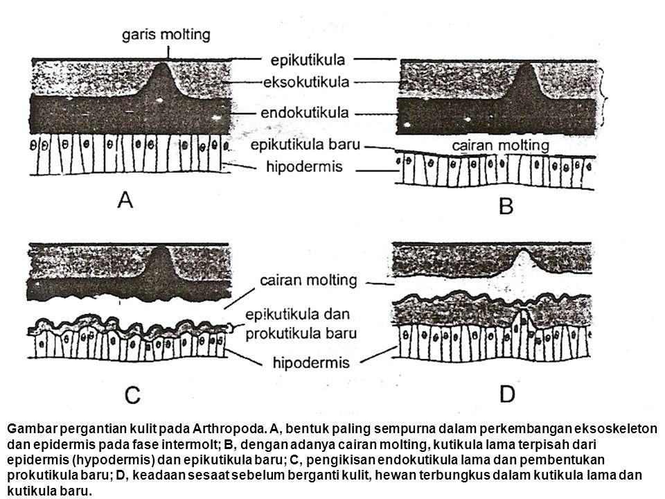 Gambar pergantian kulit pada Arthropoda