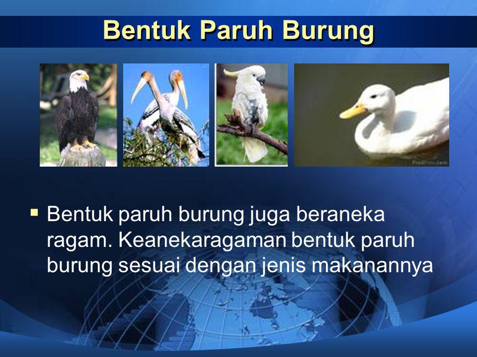 Bentuk Paruh Burung Bentuk paruh burung juga beraneka ragam.