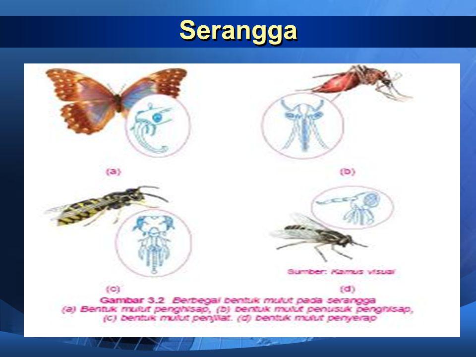 Serangga