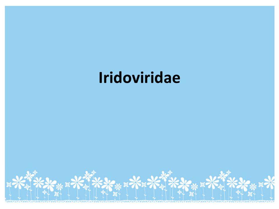 Iridoviridae
