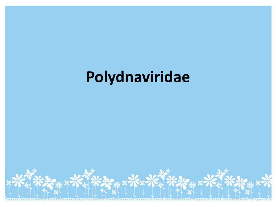 Polydnaviridae