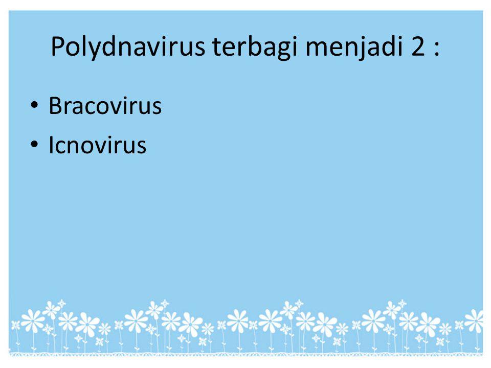 Polydnavirus terbagi menjadi 2 :