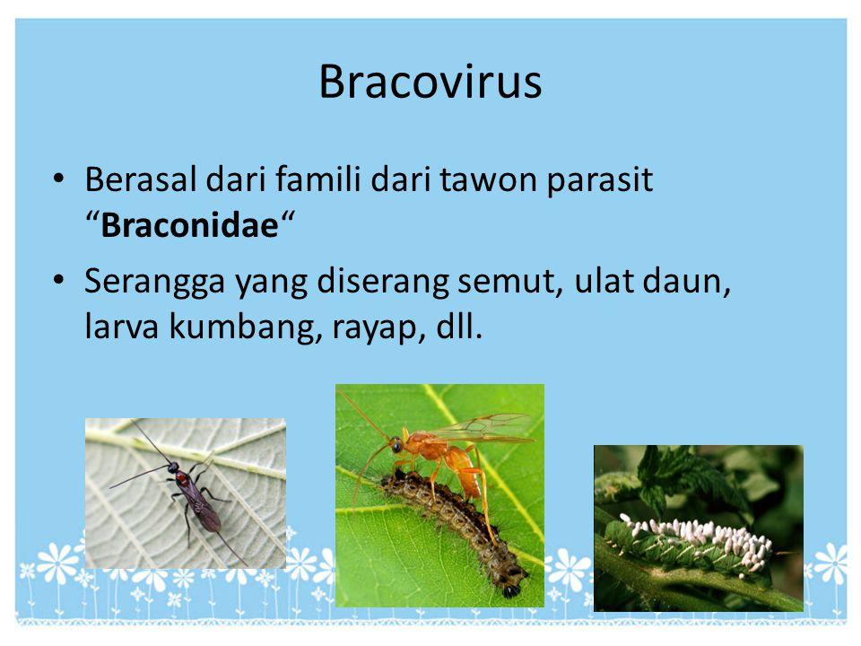 Bracovirus Berasal dari famili dari tawon parasit Braconidae