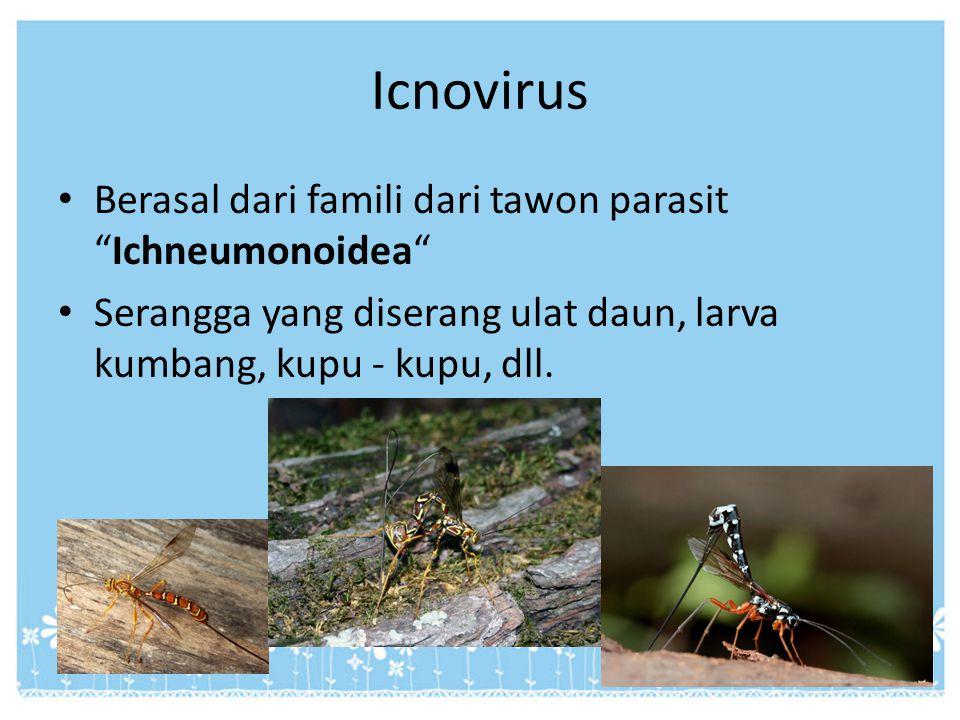 Icnovirus Berasal dari famili dari tawon parasit Ichneumonoidea