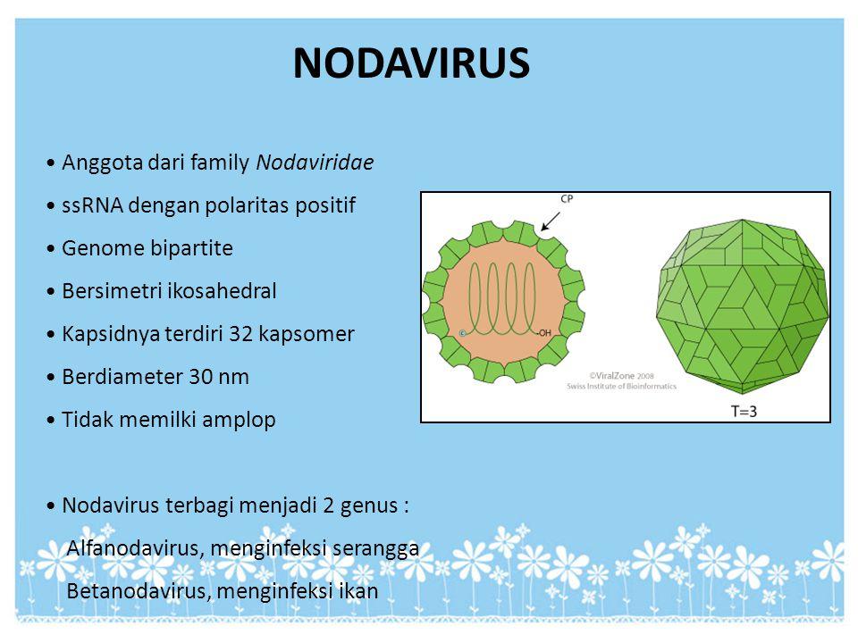 NODAVIRUS Anggota dari family Nodaviridae